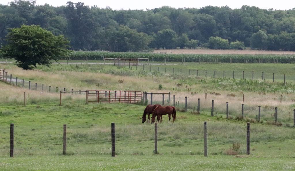 Horses in fields at WKU Farm. Photo taken by Anna Agarwal Millard North High School.